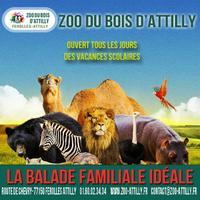 Zoo du bois d'Attilly – billets à prix réduits